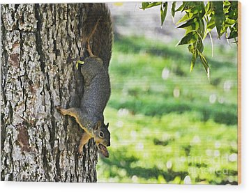 Squirrel With Pecan Wood Print by Debbie Portwood