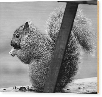 Wood Print featuring the photograph Squirrels by Ricky L Jones