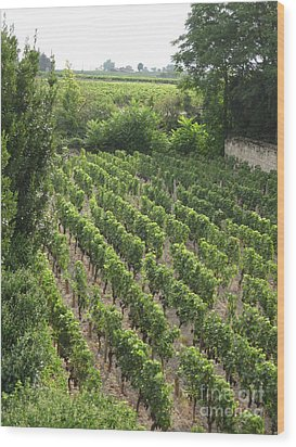 St. Emilion Vineyard Wood Print by HEVi FineArt