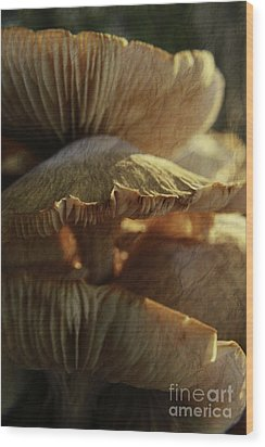 Wood Print featuring the photograph Stacked Fungas by Lori Mellen-Pagliaro