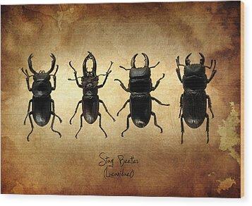 Stag Beetles Wood Print by Mark Rogan