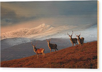 Stags At Strathglass Wood Print