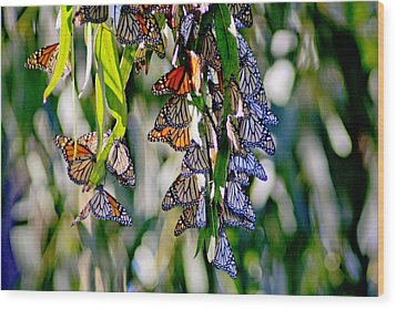 Stained Glass Butterflies Wood Print