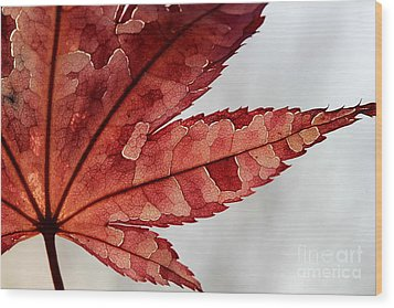 Wood Print featuring the photograph Stained Glass by Kenny Glotfelty