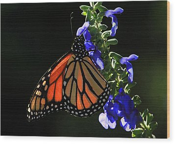Stained Glass Wings Wood Print