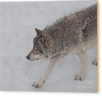 Wood Print featuring the photograph Stalker by Bianca Nadeau
