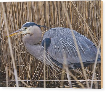 Stalking Fish In The Reeds Wood Print