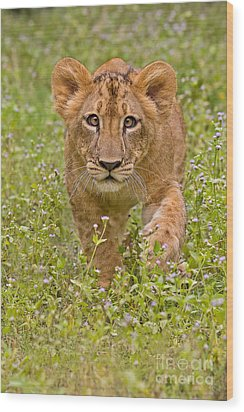 Stalking Practice Wood Print by Ashley Vincent