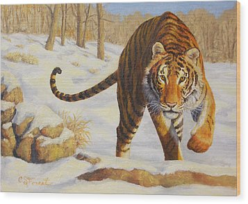 Stalking Siberian Tiger Wood Print by Crista Forest