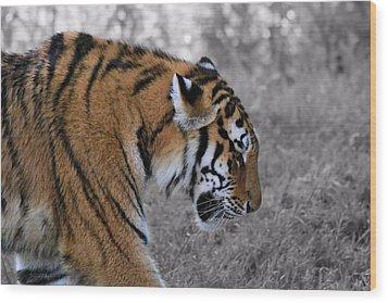 Stalking Tiger Wood Print by Dan Sproul