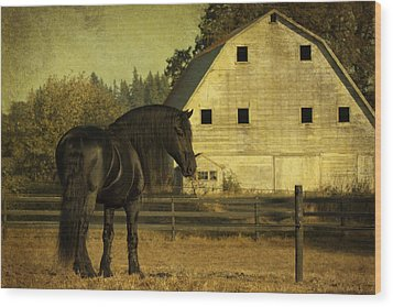 Stallion At Rest D1535 Wood Print by Wes and Dotty Weber