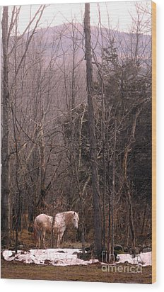 Stallion In The Mountain Pasture Wood Print by Patricia Keller