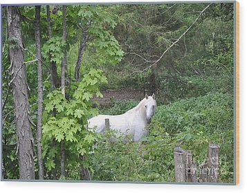 Stallion On Independence Day Wood Print by Patricia Keller