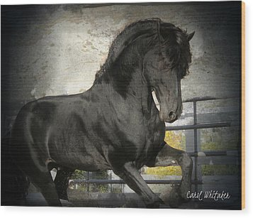 Stallion Power Wood Print by Royal Grove Fine Art