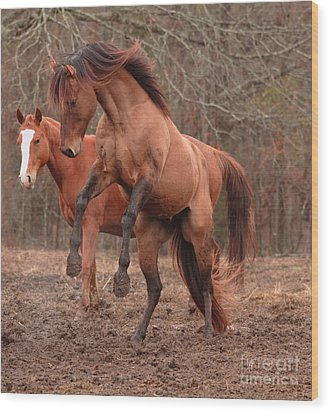 Stallion Rearing Wood Print by Russell Christie