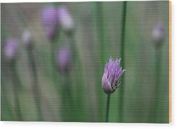 Wood Print featuring the photograph Not Just A Pretty Flower by Debbie Oppermann