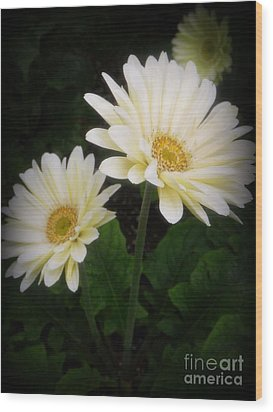 Stand By Me Gerber Daisy Wood Print