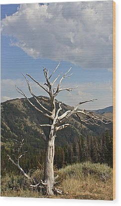 Wood Print featuring the photograph Standing Alone by Kathleen Scanlan