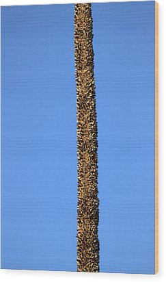 Wood Print featuring the photograph Standing Alone by Miroslava Jurcik