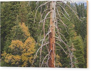Standing Wood Print