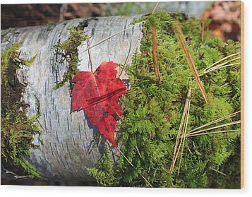 Wood Print featuring the photograph Standing Out by Alicia Knust