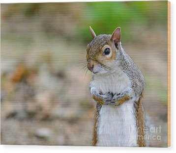 Standing Squirrel Wood Print