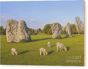 Standing Stones And Sheep Avebury Wood Print by Colin and Linda McKie