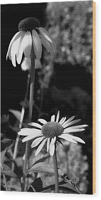 Wood Print featuring the photograph Coneflowers Standing Tall   by James C Thomas