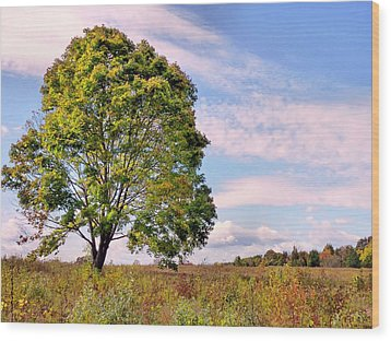 Standing Tall Wood Print by Janice Drew