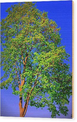 Standing Tall Wood Print by Mary Beth Landis