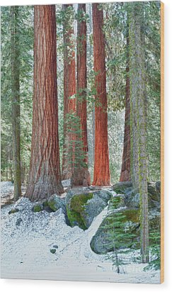 Standing Tall - Sequoia National Park Wood Print by Sandra Bronstein