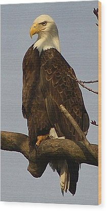 Standing Watch Wood Print by Bruce Bley