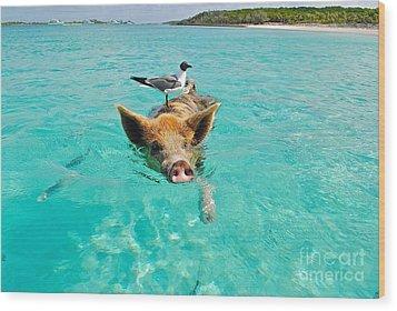 Staniel Cay Swimming Pig Seagull Fish Exumas Wood Print