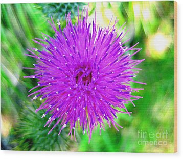 Wood Print featuring the photograph Star Burst by Kathy Bassett