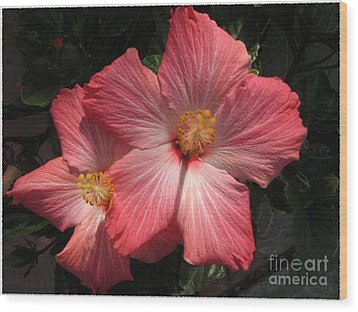 Wood Print featuring the photograph Star Flower by Barbara Griffin