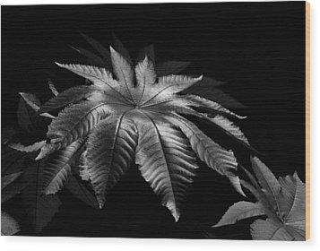 Star Leaf Wood Print by Lorenzo Cassina