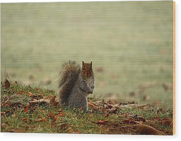 Wood Print featuring the photograph Stare Down by Lynn Hopwood