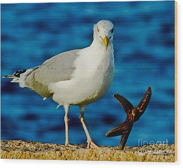 Starfish And Seagull Dance On The Rocks Wood Print by Carol F Austin