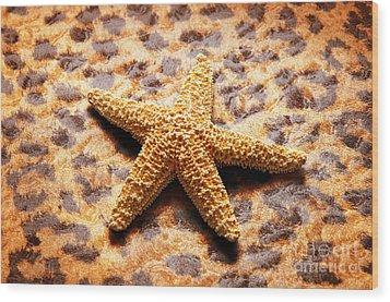 Starfish Enterprise Wood Print by Andee Design