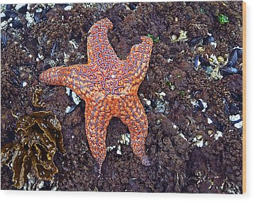 Starfish - Oregon Coastline Wood Print by George Bostian