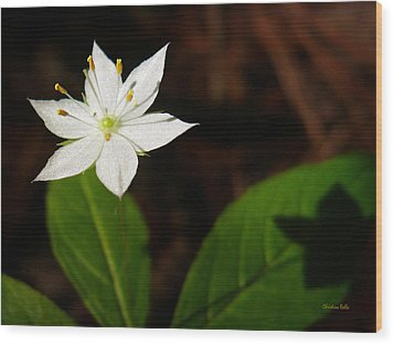 Starflower Wood Print by Christina Rollo