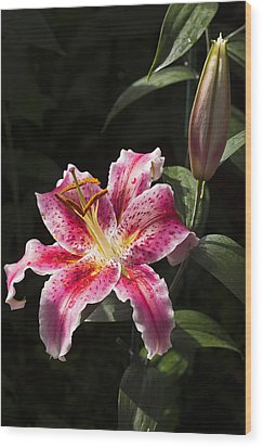 Stargazer Bloom And Bud Wood Print