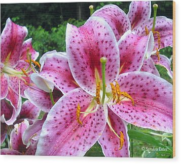 Wood Print featuring the photograph Stargazer  Lilies by Sandra Estes