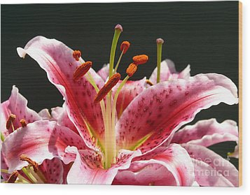 Stargazer Lily Wood Print by Maria Janicki
