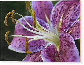 Stargazer Lily Wood Print by Robert Culver