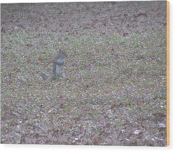 Staring Squirrel Wood Print by Rickey Rivers Jr