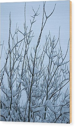 Stark Beauty - Snow On Branches Wood Print by Denise Beverly