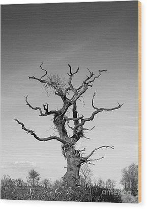 Stark Tree Wood Print by Pixel Chimp