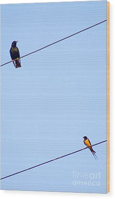 Starling And Swallow Wood Print by Tim Holt