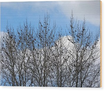 Starlings In The Cottonwoods Wood Print by Will Borden